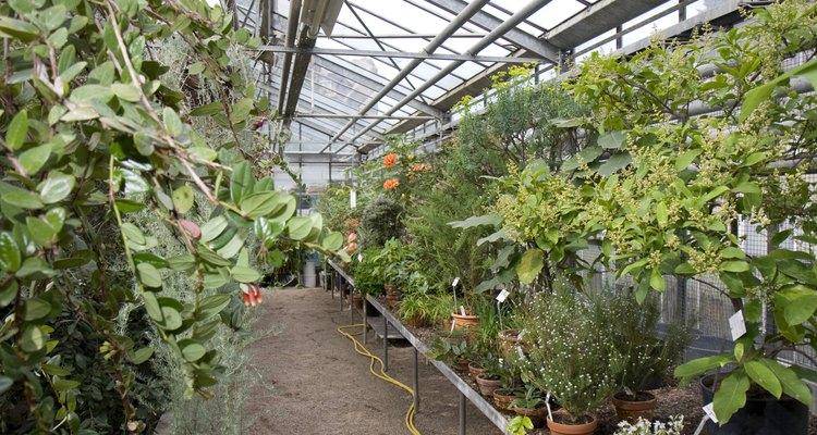 Las plantas transforman la energía de la luz en energía química durante la fotosíntesis.