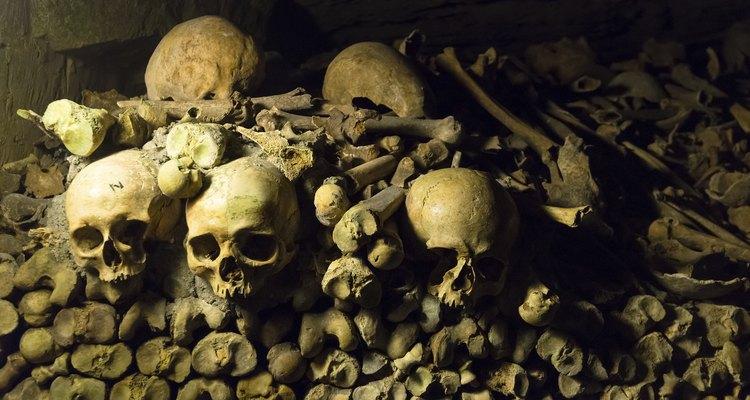 Hay placas para identificar la procedencia de los huesos.