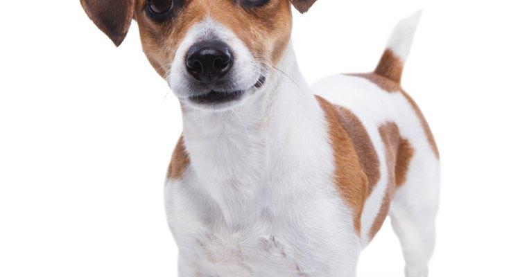 Una vez que sepas el tipo de problema auditivo que tiene tu perro, puedes comenzar el tratamiento con remedios caseros.