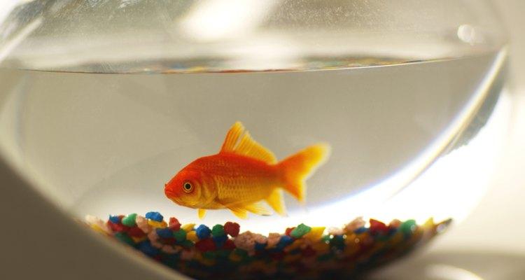 O pH influencia na saúde dos seus peixes