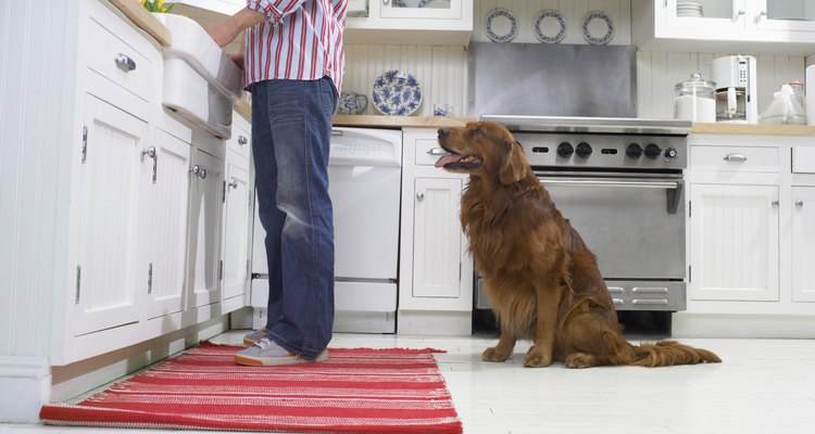 Mesmo com os cães mais bem treinados, esse tipo de acidente pode acontecer