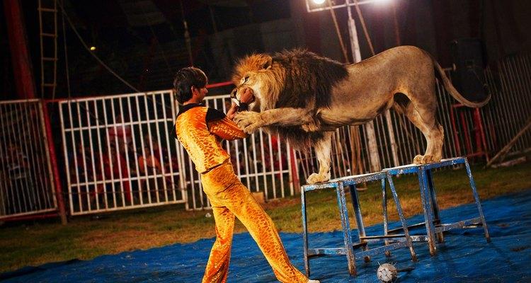 Domador de leones.