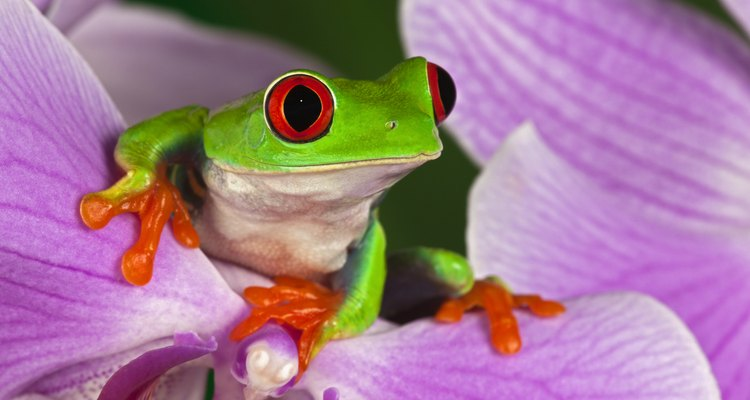 Items like frogs and salt bring good fortune according to Scottish tradition.