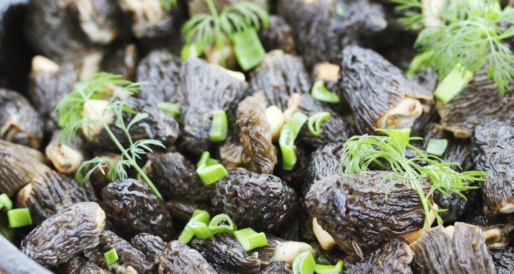 morels and onions