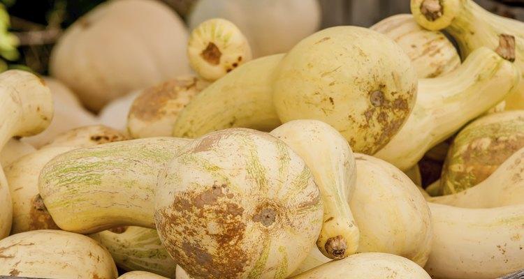 display of fresh yellow squash at the market