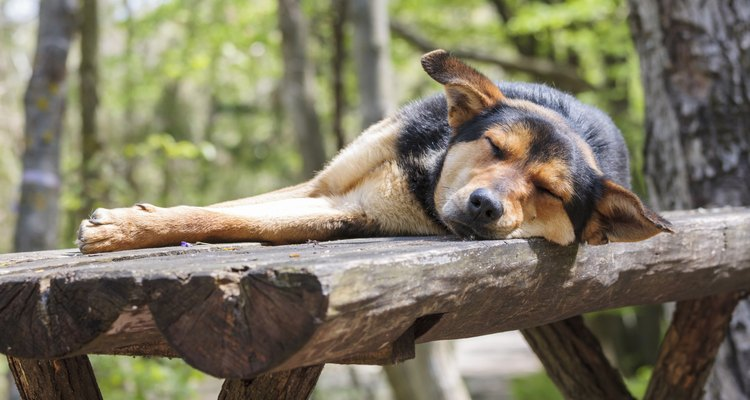 No asustes a un perro que duerme.