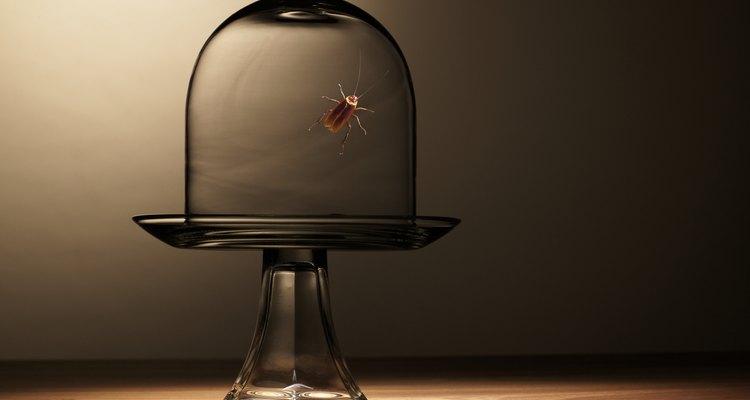 Las cucarachas son atraídas por incluso las partículas más pequeñas de comida sobrante.