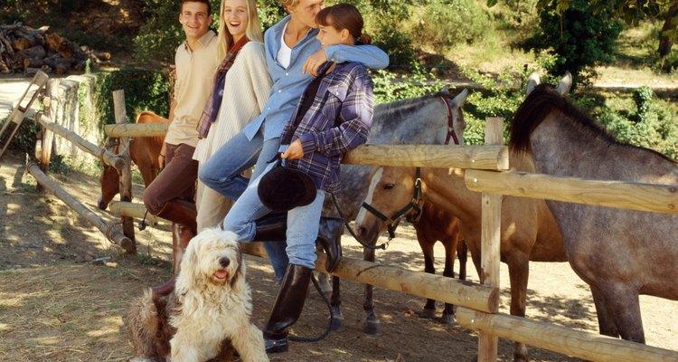 Mantenha o cão longe de vermífugos de cavalo