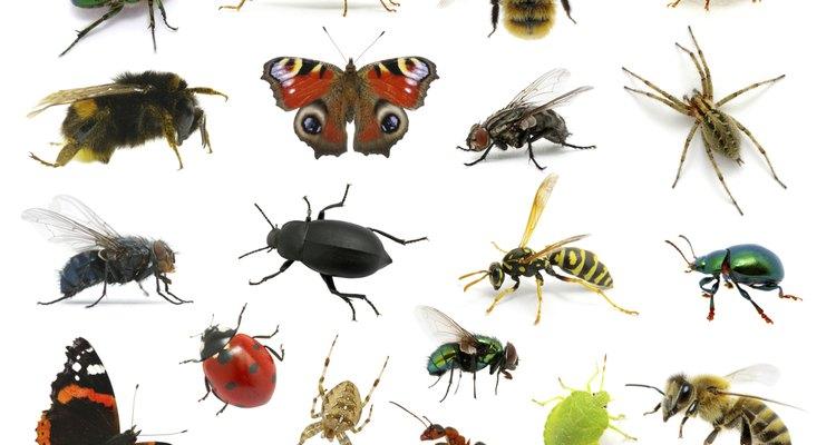 La mayoría de las personas saben cómo luce una mosca, un ciempiés, una pulga o una hormiga.