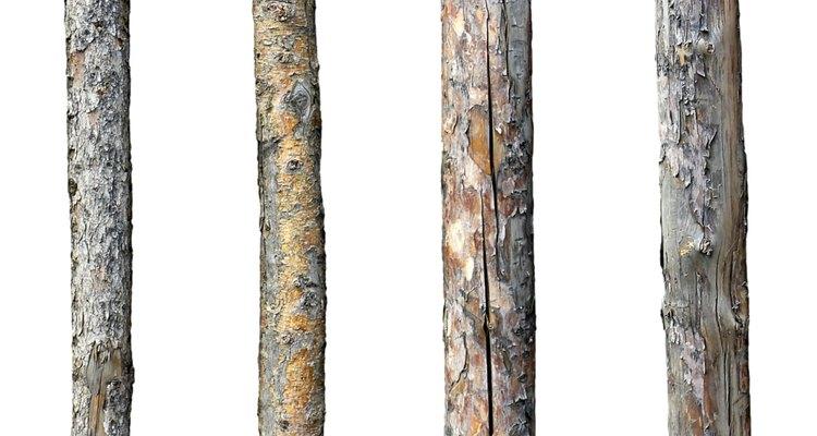 Cómo determinar el peso de un árbol.