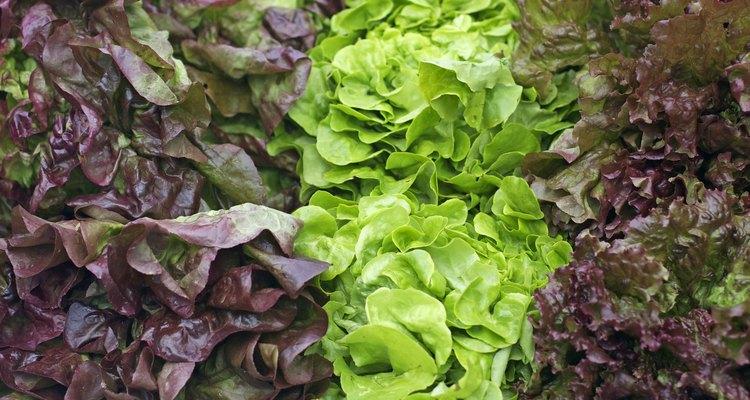 three types of lettuce