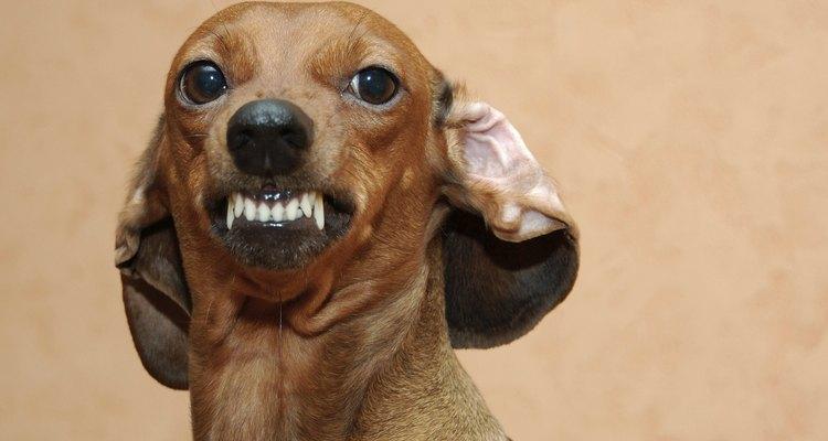 Royal Canin cuenta con toda una gama de alimento para perros acorde a sus necesidades.
