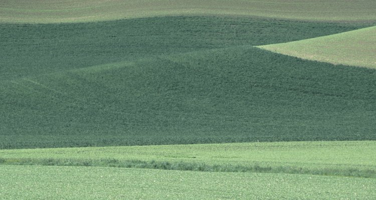 Plantar lentejas reduce la necesidad de depender de fertilizantes nitrogenados sintéticos.
