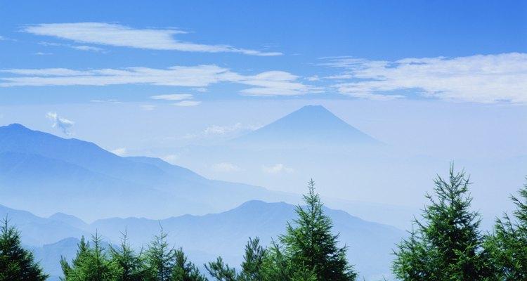 Árvores perenes no Monte Fuji