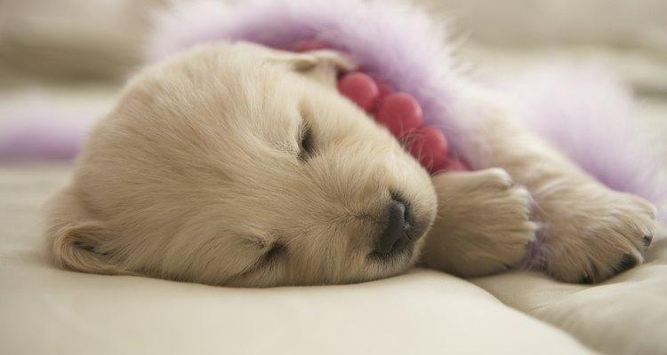 A Budesonida é eficaz no tratamento da Doença Inflamatória Intestinal canina, mas há risco de efeitos colaterais