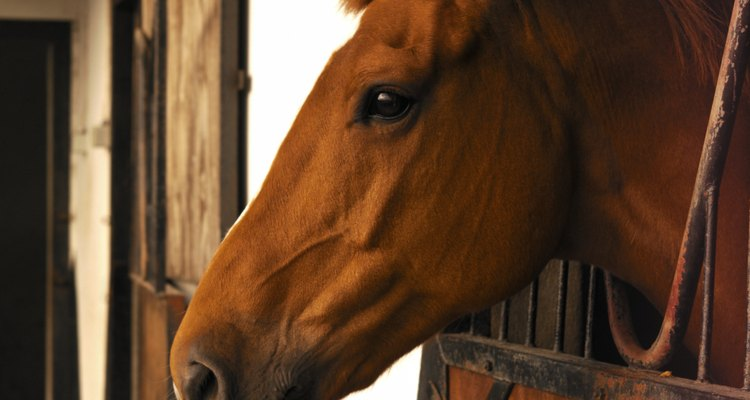 As verrugas em cavalos são altamente contagiosas