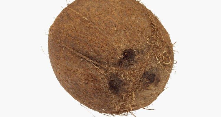 La semilla más grande es esa del doble del coco.