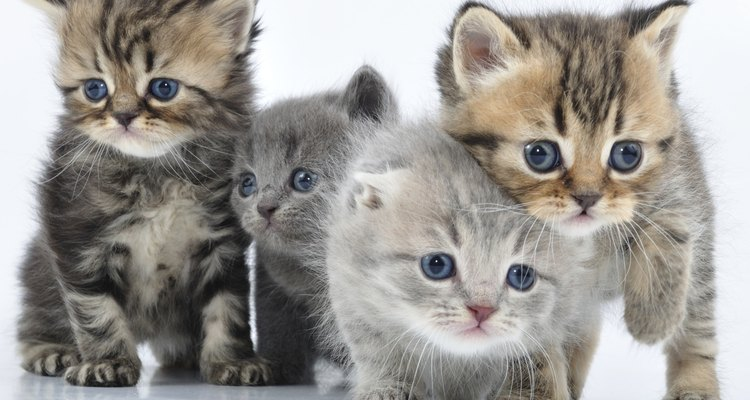 Add nutrients to the milk you give your kittens.