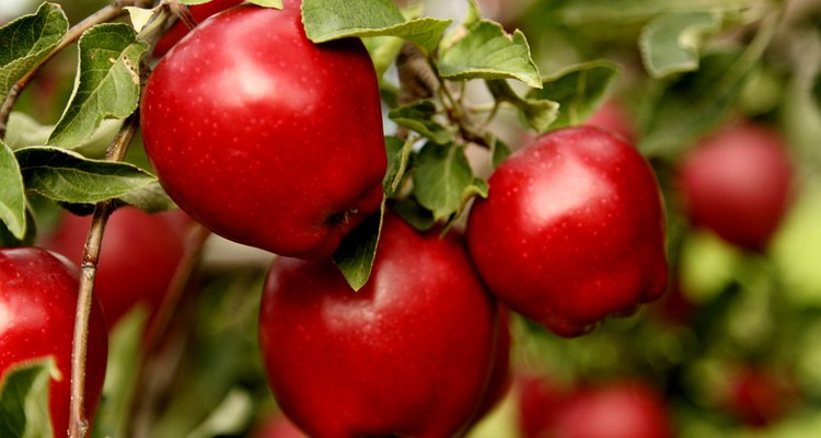 Closeup of Red Delicious Apples.