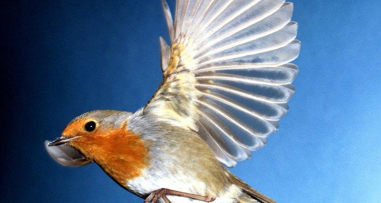 Pássaros precisam ser acalmados quando estão agitados