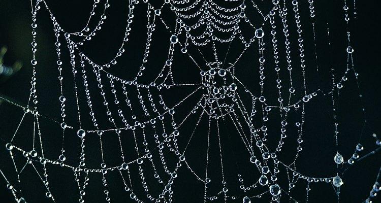 Aranhas caranguejeiras são chamadas assim por causa do corpo parecido com o de um caranguejo