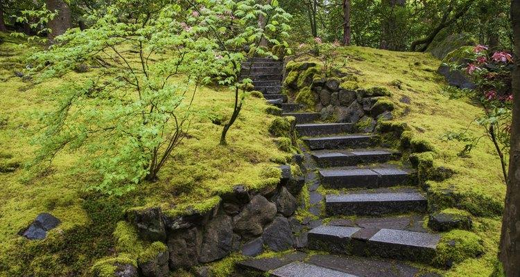 Os jardins tradicionais japoneses contam com grandes extensões de musgo