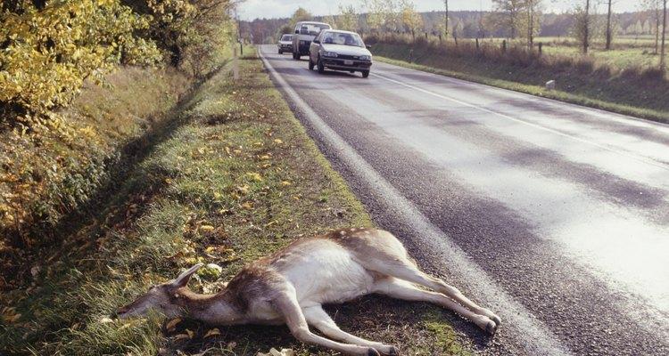 Esse trabalho é de suma importância porque, em alguns casos, acidentes podem ser causados por causa de animais mortos nas rodovias