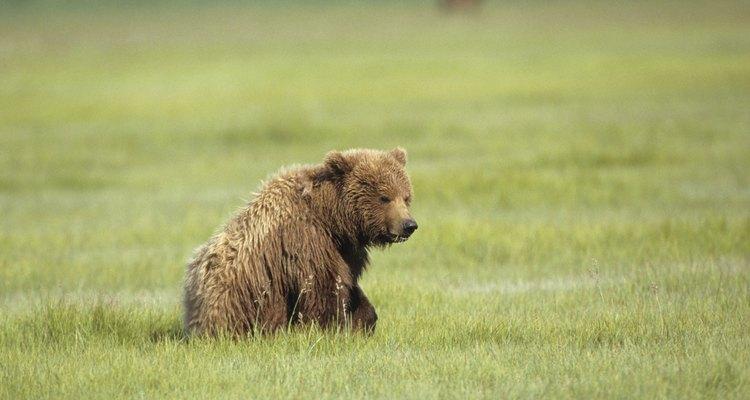 Alaska tiene una abundancia de animales terrestres de gran tamaño.