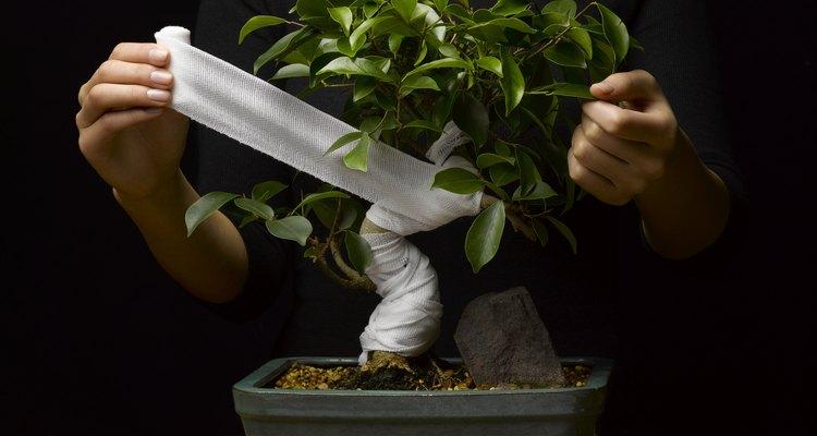 Las plantas de jade pueden ser entrenadas para convertirse en atractivos bonsái.