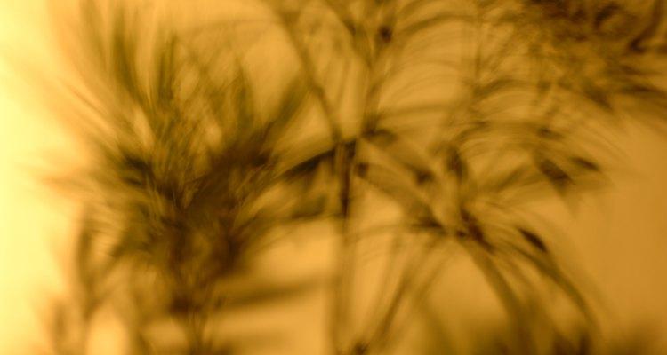 Siempre quita las ramas muertas, enfermas o dañadas para proteger la salud de tu arbusto.