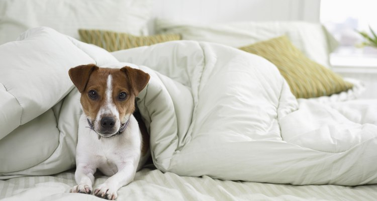 dogs with diabetes can still live full happy lives