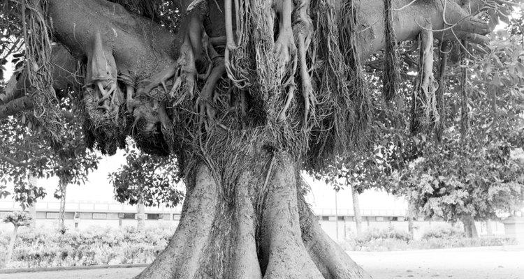 O uso de herbicidas recomendados é uma das maneiras mais eficientes de matar árvores indesejadas
