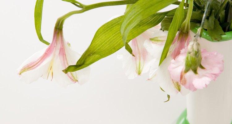 Tus flores se pueden marchitar por varios motivos.