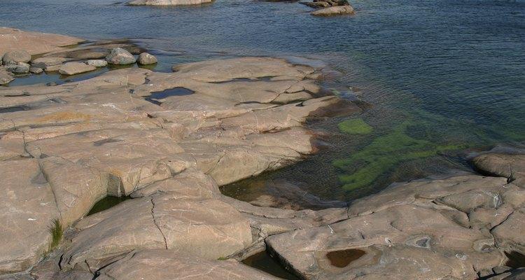 Chlorella e spirulina são diferentes tipos de algas utilizadas em suplementos alimentares.