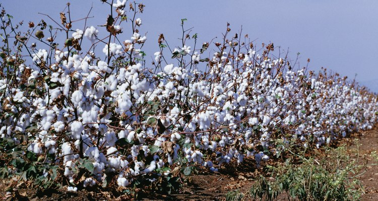 Cotton is a plant-based fibre.