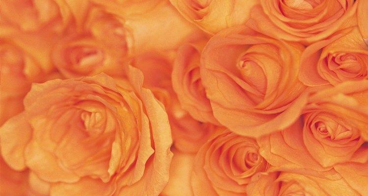 El color naranja representa calor, vitalidad, energía y entusiasmo.