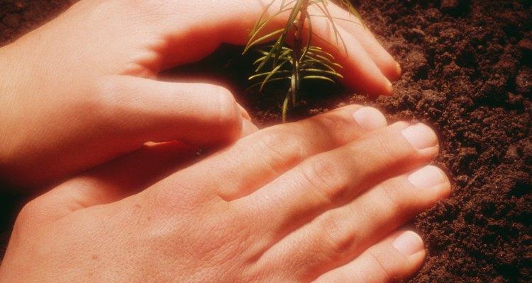 Afirma bien la tierra sobre la semilla para acelerar la germinación.