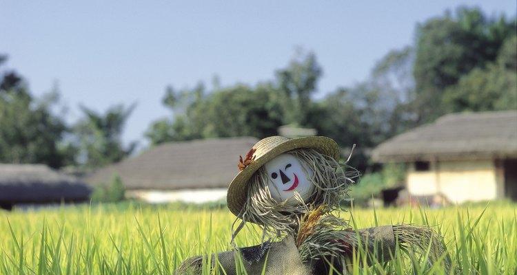 Incluso los espantapájaros con caras sonrientes disuaden a las aves de los campos de cultivo.