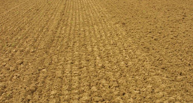 La cal agrícola reduce la toxicidad de algunos   elementos minerales