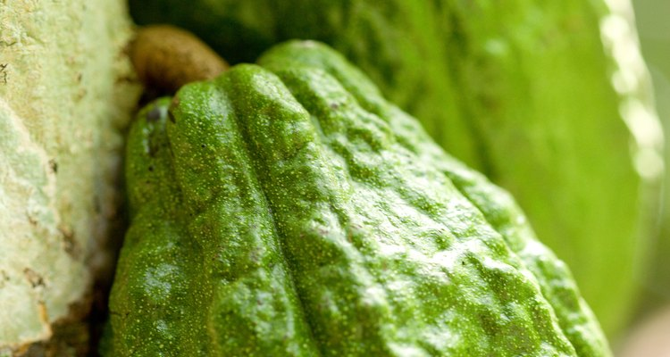 Remova galhos improdutivos para promover a frutificação