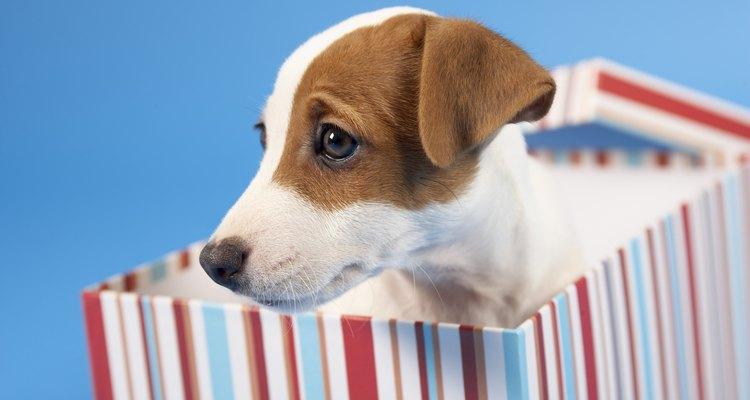 Este método crea perros destructivos y tristes.