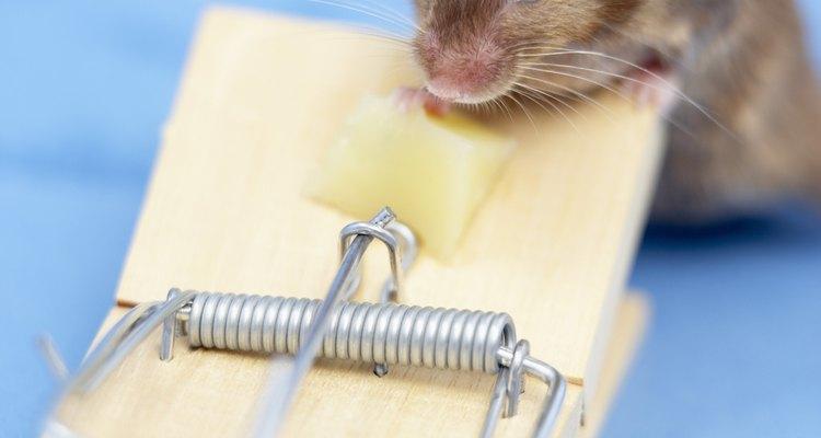 Un ratón es mucho más pequeño que una rata.