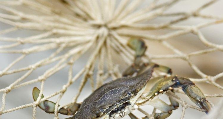 Los cangrejos no nativos pueden dañar el hábitat natural.
