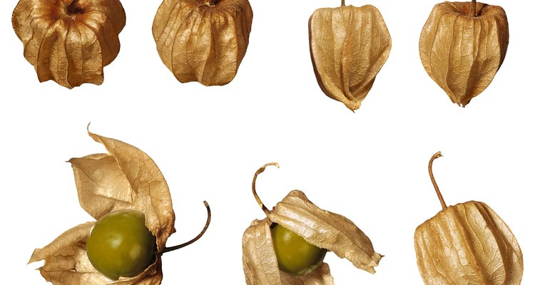 Cape gooseberry is also known as ground cherry, Peruvian cherry or golden husk.