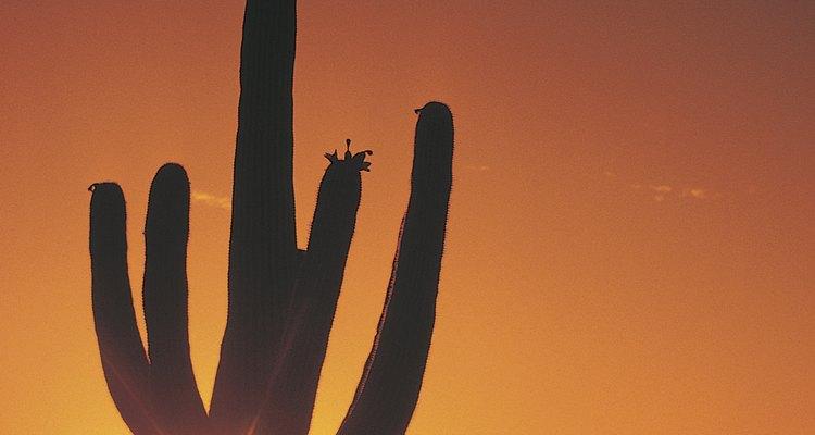 Nuevo México y Baja California fueron anexados a Estados Unidos en 1847.