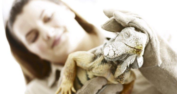 Investiga si el zoológico local tiene programas interactivos con los reptiles.