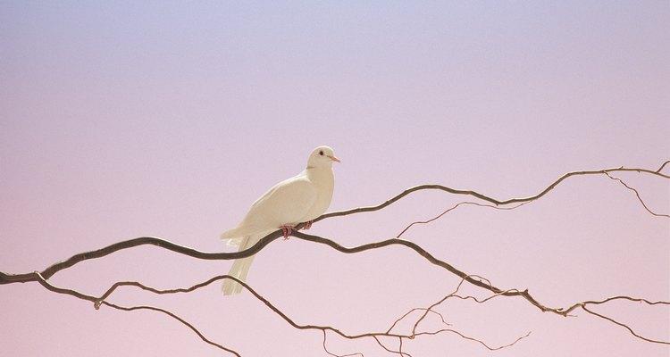La paloma es un animal que comúnmente simboliza paz.