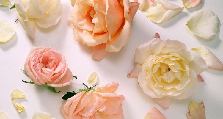 Visita tu tienda de jardinería local para ver qué rosas crecerán mejor en tu zona.