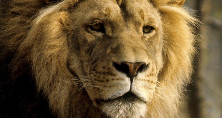 Captura el corazón de un Leo llenándolo de piropos.