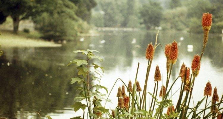Um ecossistema de uma lagoa de água doce inclui plantas, animais, bactérias e ambiente